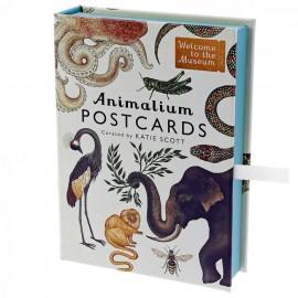 Zestaw kartek pocztowych Katie Scott Animalium Postcards